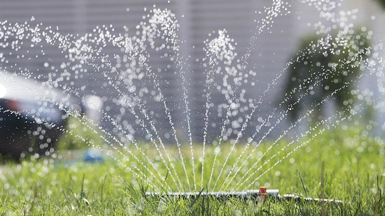 Bilden visar en vattenspridare som sprider vatten på gräs. Foto: Fredrik Sandberg/TT.