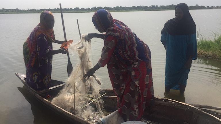 Kvinnorna i byn utanför Bol i Tchad har just kommit in med morgonens fångst. Mest småfisk i näten.