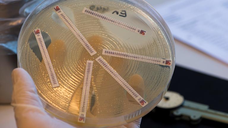 Mätning av resistens och känslighet av antibiotikas effekt på bakterier i en bakterieodling. Folkhälsomyndighetens smittskyddslabb i Stockholm.