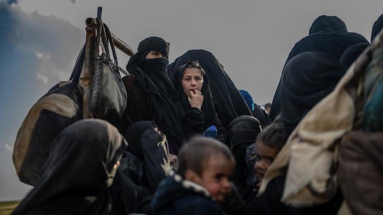 Just nu flyr människor från Islamiska statens sista fäste i Syrien.