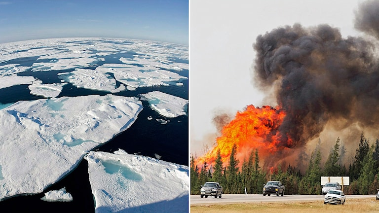 Temperaturhöjningen påverkar både havsnivåerna och risken för skogsbränder.