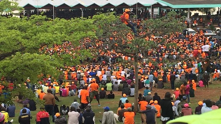 Orangeklädda personer på gräs
