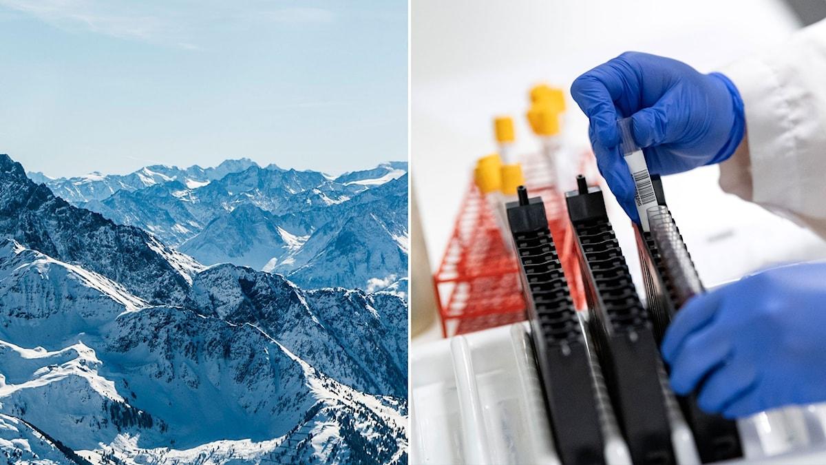 split med alper och antikroppstester