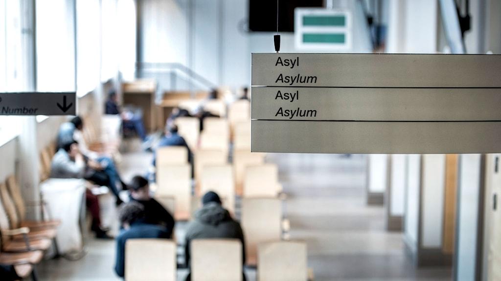 Asylprocess på Migrationsverket i Solna.