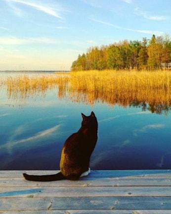 Katt på brygga, fotograferad av Madelene Peterson, Örebro. Foto: Madelene Peterson/Postnord