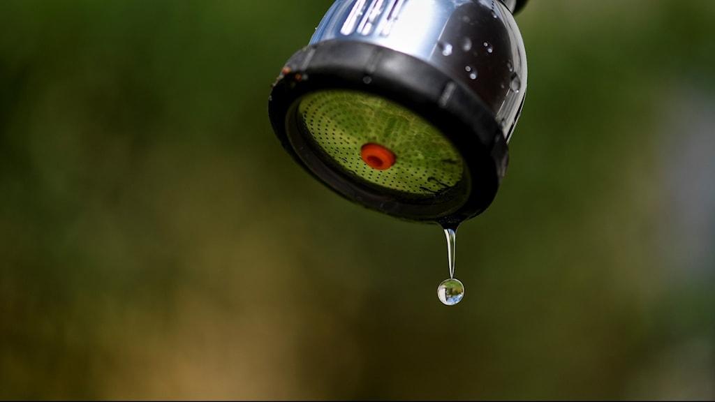 En vattenslang där vattnet droppar ut.