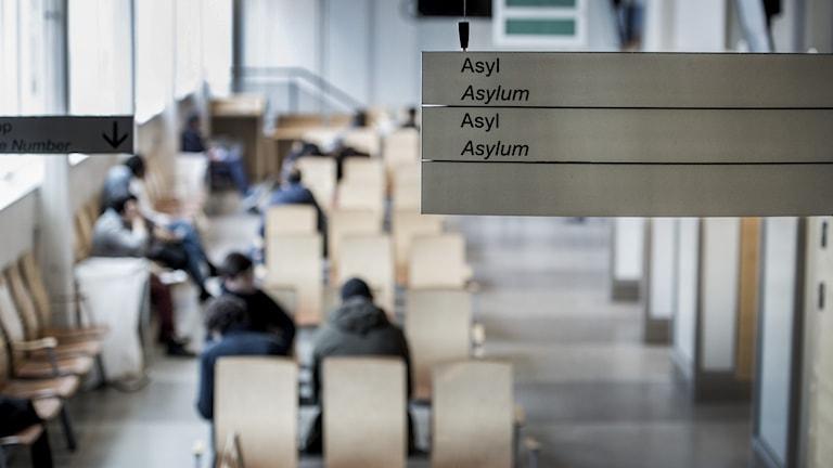 bild på skylt där det står asyl inne på Migrationsverket