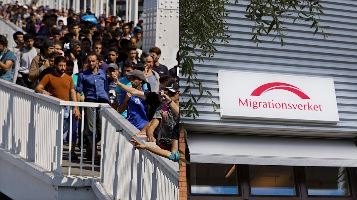 Migranter i Ungern. En en skylt med Migrationsverkets logotyp.