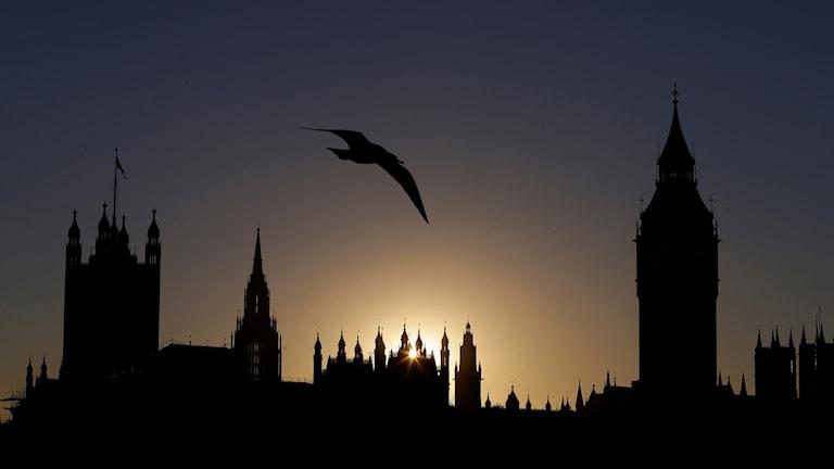 Brittiska ledamöter laddar upp för EU-val