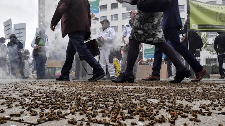 Aktieägare på väg till Bayers årsstämma  trampar på döda bin som placerats ut av miljöaktivister.