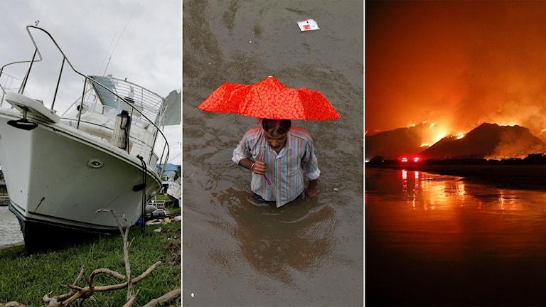 Tredelad bild: Båt som ligger uppspolad på land, man som vadar i djupt vatten, skogsbränder mot natthimmel.