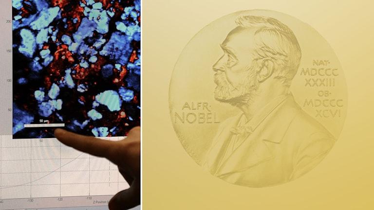 Ett montage av nobelprisets medalj på ena sidan och på andra en bild av ett finger som pekar på en färgstark graf på en datorskärm, en analys med hjälp av laserteknik.