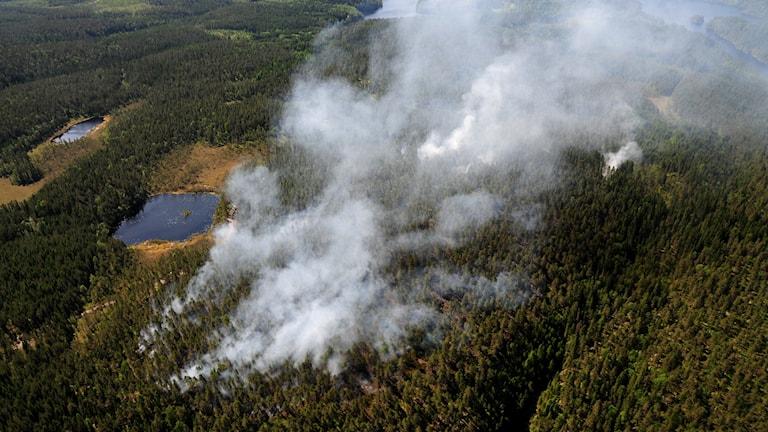 Blixtnedslag tros ha orsakat den kraftiga brand som blossade upp i ett skogsområde i Bengtsfors kommun.
