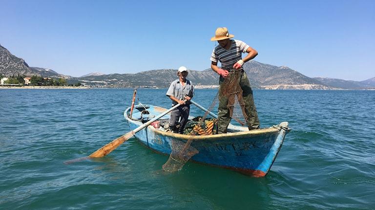 Kräftbeståndet i sjön Eğirdir i södra Turkiet har återhämtat sig sedan åttiotalets sjukdomar och nu fångas på nytt många ton kräftor ur sjön varje år