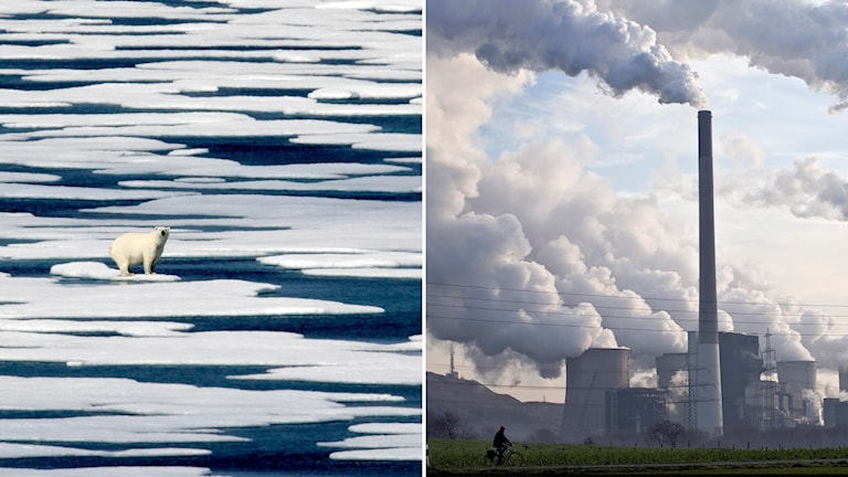 Delad bild: Isbjörn på polaris och kolkraftverk som släpper ut rök.