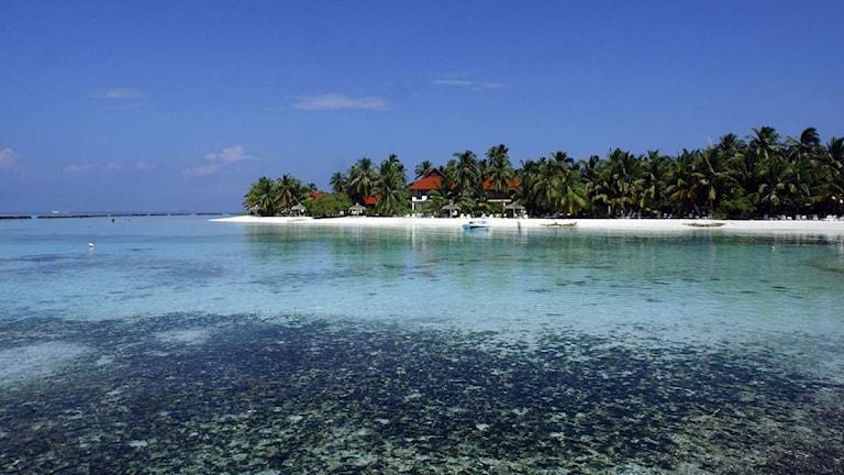 Maldivernas koraller känsliga för klimatändringar