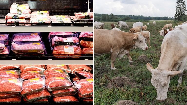 Sommarens torka påverkar köttbönderna och köttmarknaden.