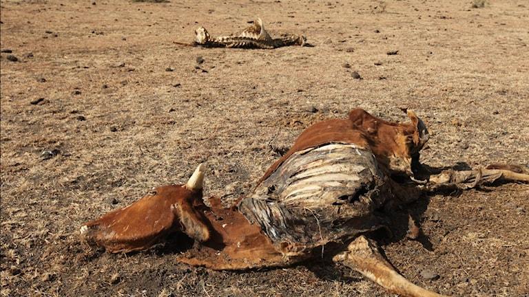 Landsbygd i Kenya drabbad av torka 2009.