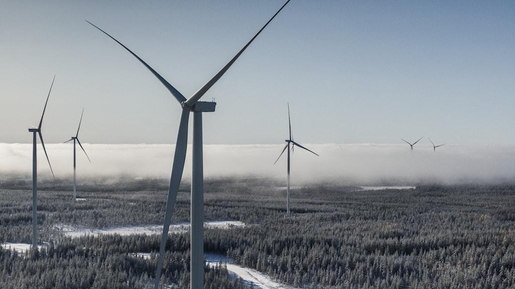 Markbygden 1101 utanför Piteå är Europas största vindkraftspark på land.