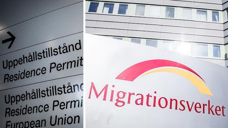 Uppehållstillstånd och Migrationsverket (arkivbilder). Foto: TT. MOntage: Sveriges Radio.