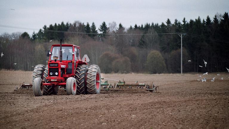 Röd traktor med harv på åker.