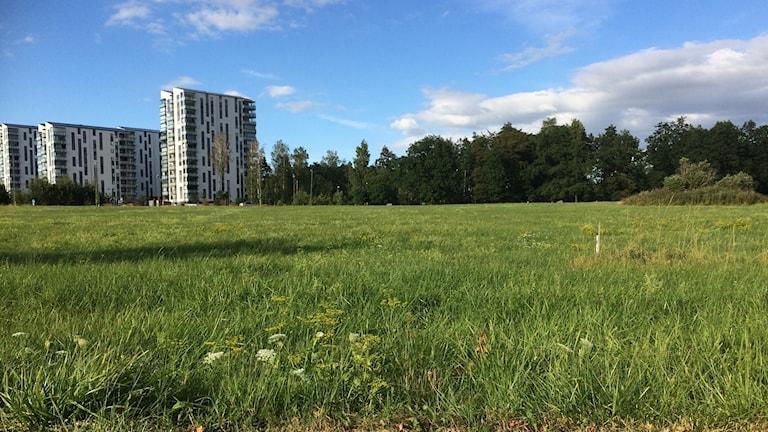 Gräsyta som snart kan vara bebyggd i Linköping.