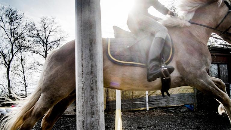 Häst som hoppar i motljus.