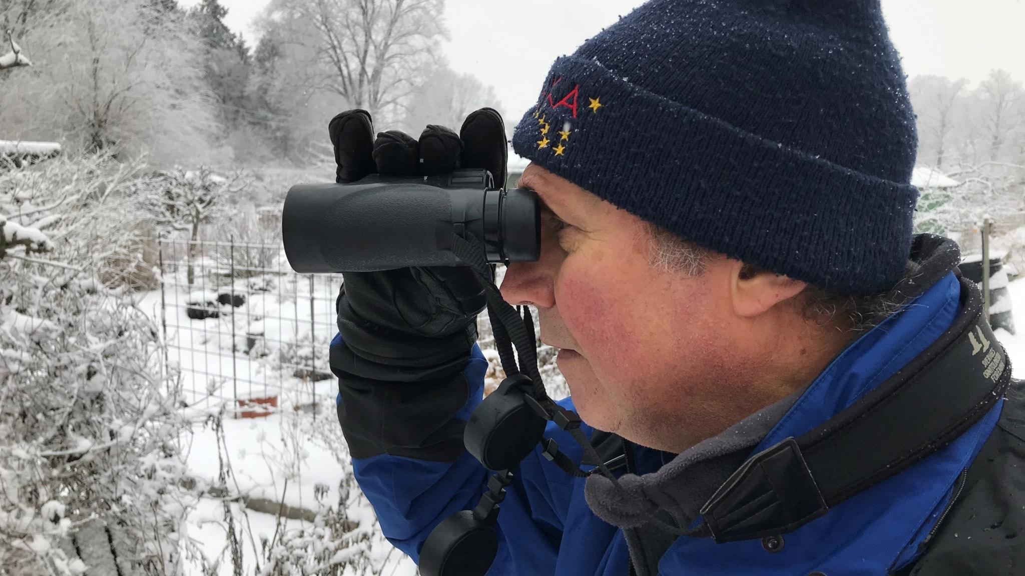 Vinterfågelräkning: Koltrasten blir vanligare