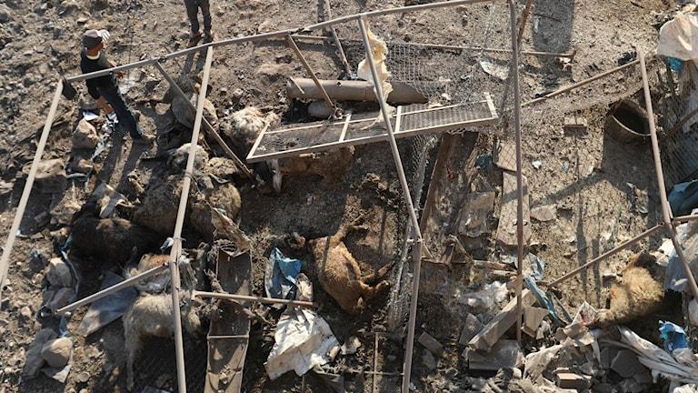 Förstörelse i byn al-Daher i Idlibprovinsen i Syrien.