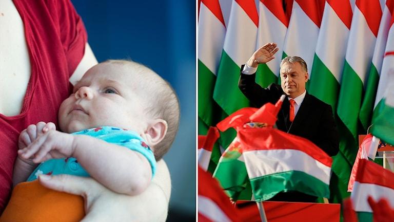 Bebis och Ungerns viktor Orban