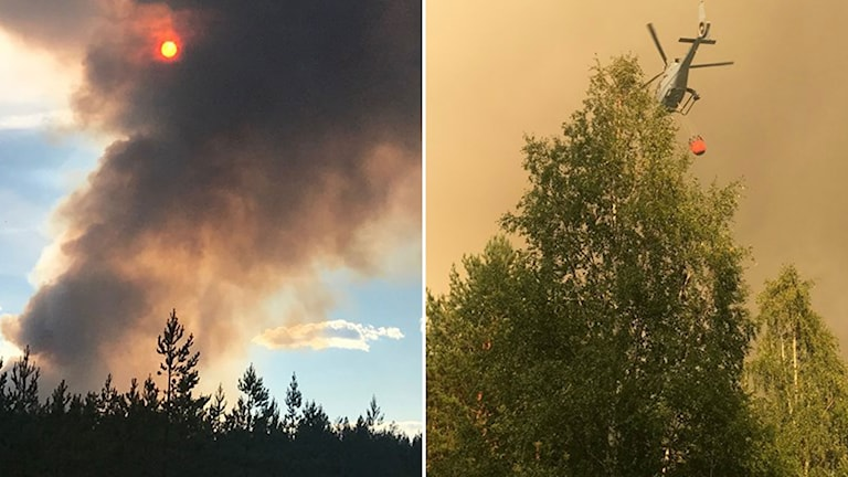 Brinnande träd.