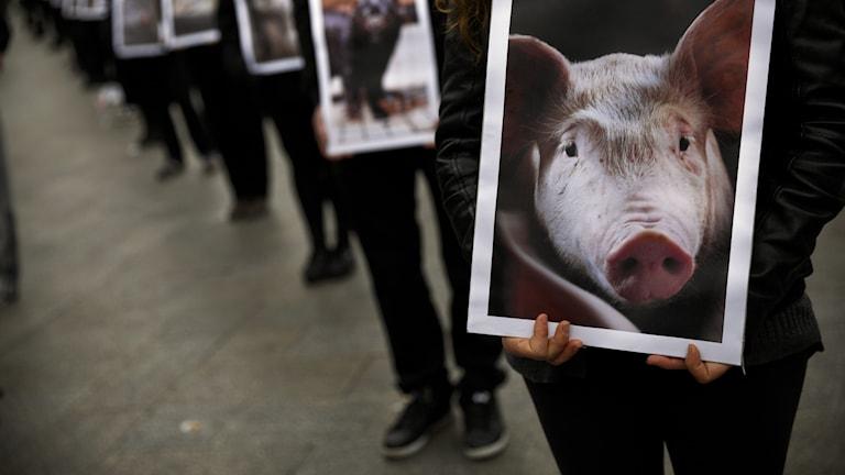 Djurrättsdemonstration med plakat med bilder på djur