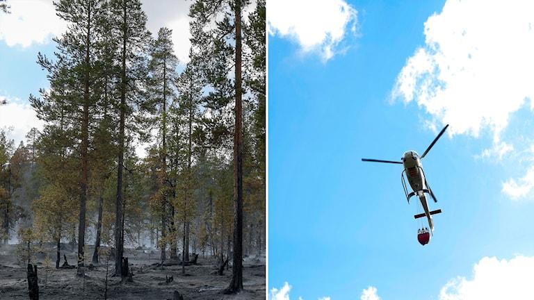 Bränder Trängslet skogsbrand helikopter