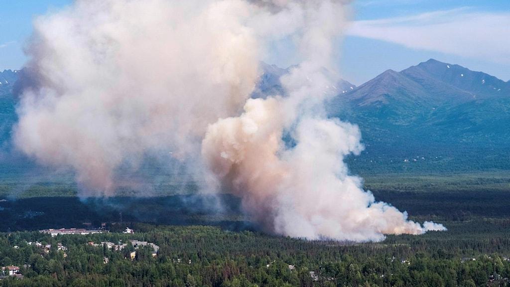 Arktis skogsbrand.