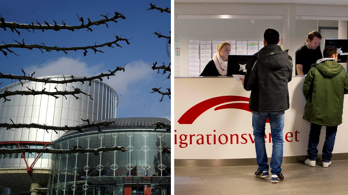 Europadomstolen och Migrationsverket.