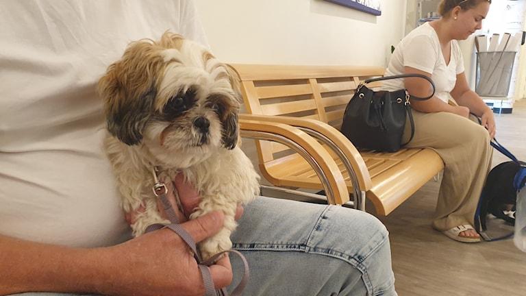 hund som väntar på veterinär i väntrum.