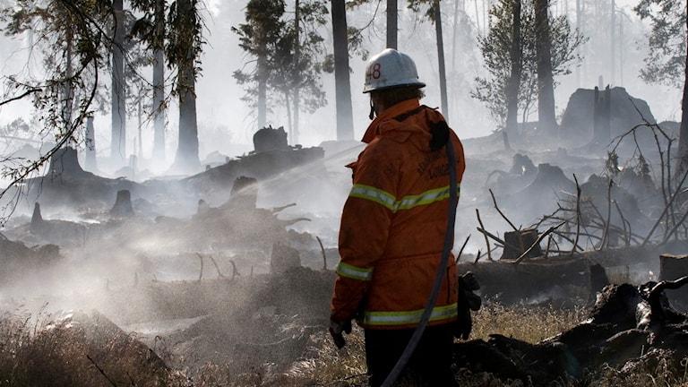 En brandman släcker en skogsbrand.