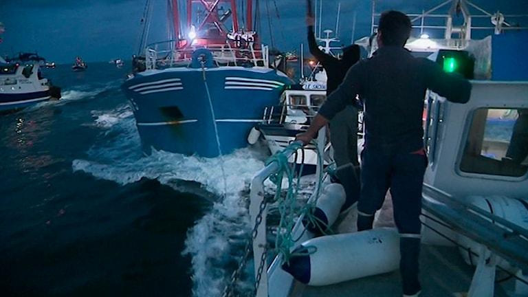 Musselkriget: franska båtar försöker stoppa några större brittiska båtar som fiskar efter musslor