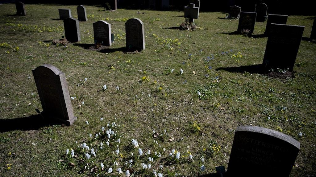 Gravstenar på en kyrkogård.