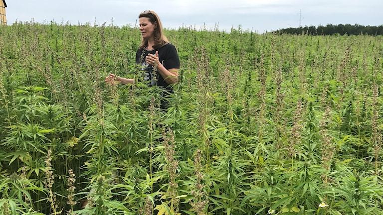 Medicinsk cannabis.