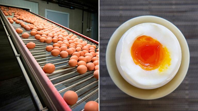 Ägg på rullband och kokt ägg.