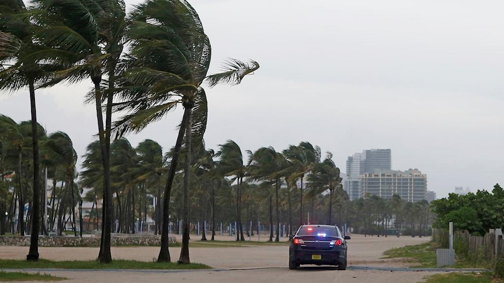 Polisbil vid palmer