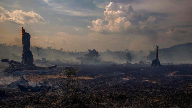 Bränt område i Amazonas.