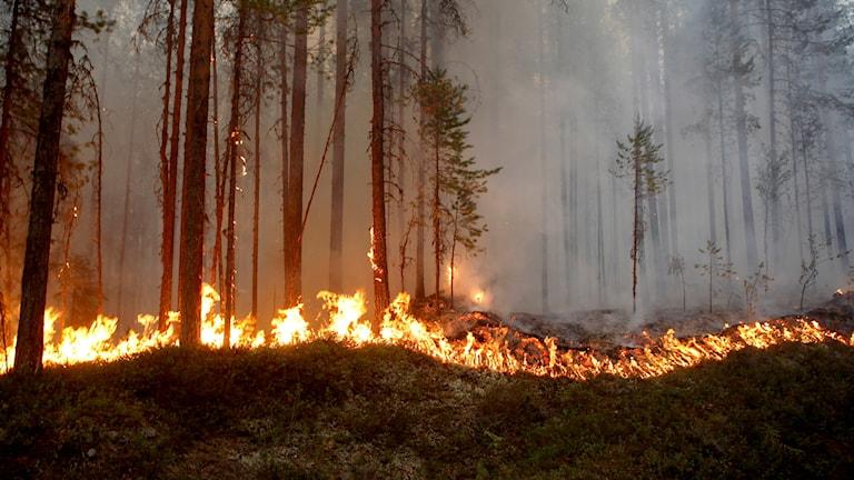 Branden i Ljusdal. Bilden är tagen söndag 15 juli.