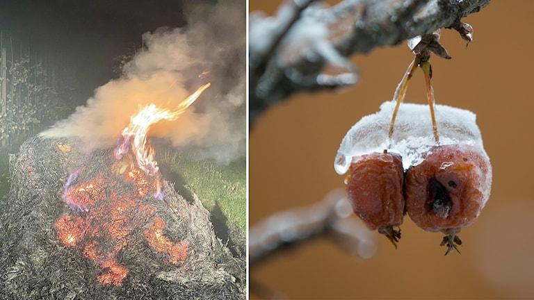 Montage på halm som eldas och ett äpple med is ovanpå.