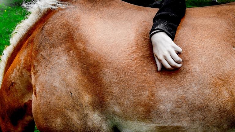 Hand stryker häst över ryggen.