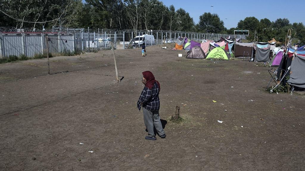 Ungern flyktingar
