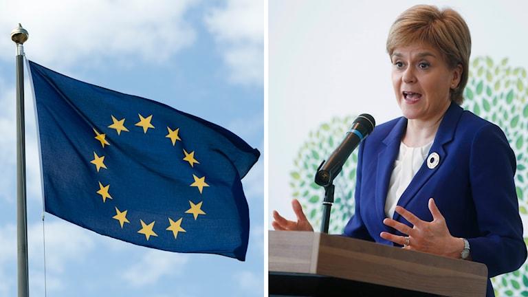 I Skottland har försteministern Nicola Sturgeon i dag lagt fram sin plan för hur Skottland ska kunna stanna kvar inom EU:s inre marknad