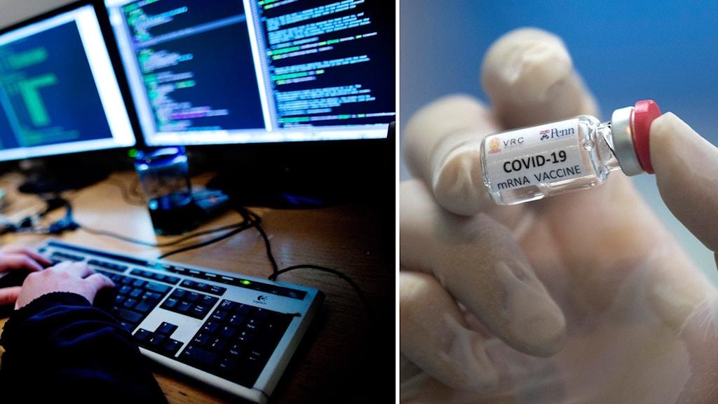 Person framför dator och behållare med prototyp av coronavaccin.