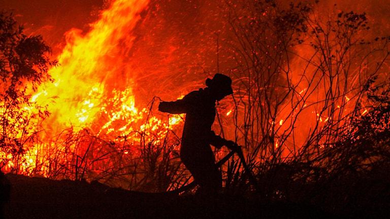 Bränderna i Indonesien sprider sig